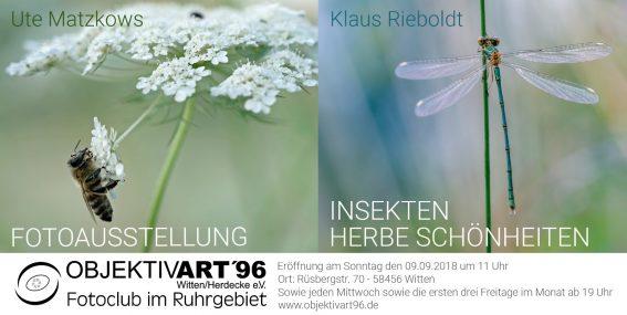 Insekten        –        Herbe Schönheiten    Eine Fotoausstellung von Ute Matzkows und  Klaus Rieboldt