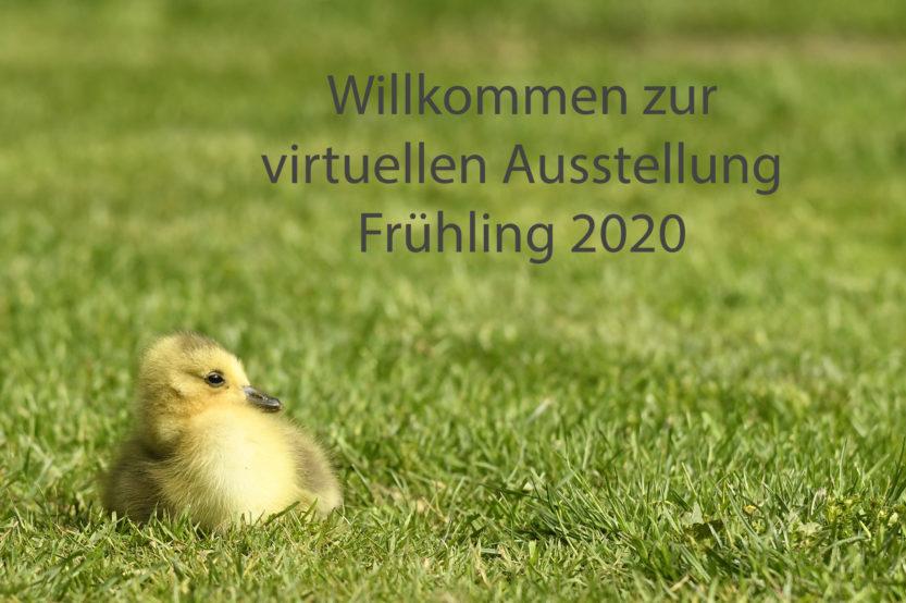 Virtuelle Clubausstellung – Frühling 2020